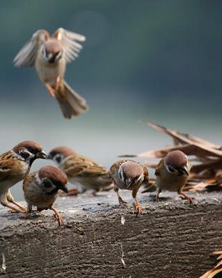Amazing Bird Photography: to water mark