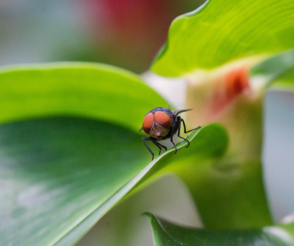 Macro photography is one of the photography trends to watch out for in 2020.