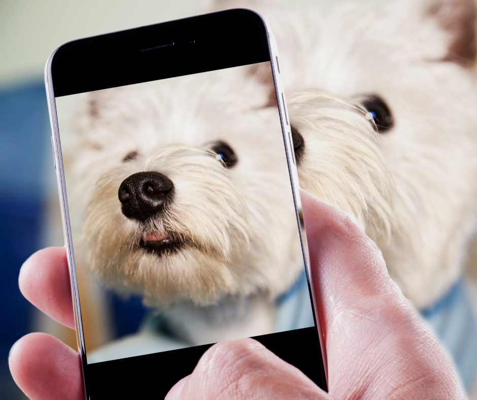You can practice pet photography by snapping your own pets.